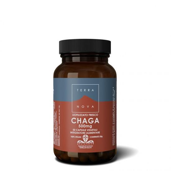 CHAGA (500 mg)